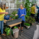 Bilden överst visar växthuset i det nybyggda Kamelia Hus vid Gröntorvet i Valby, ett av 11 pilotprojekt med stöd av Realdania.